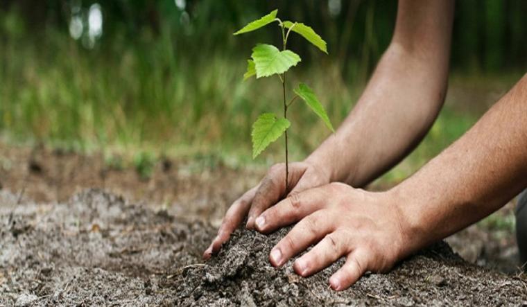 """""""Chaque arbre est le symbole vivant de la paix et de l'espoir. Celle qui plante les arbres .""""  (Wangari Muta Maathai)"""