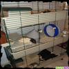 Leur nouvelle cage n°2