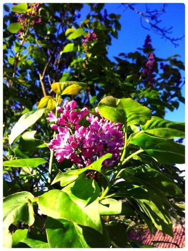 Joli mois de mai au jardin