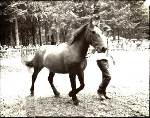 Jappeloup ou la passion du cheval