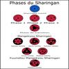 L'évolution des sharingans