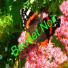 Photos 62: Papillon 2