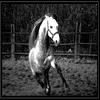 Apprendre au cheval a sauter...
