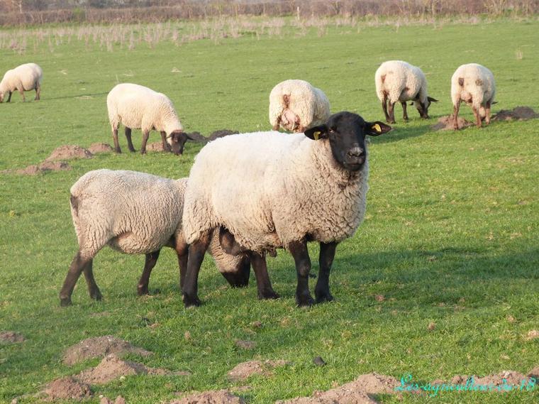 Quelques animaux de la ferme .