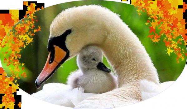 la douceur de maman
