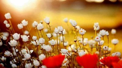 fleurs et musiques
