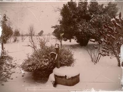 """""""Snows"""""""
