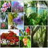 La flore de l'île : exubérance et luxuriance sont au rendez-vous