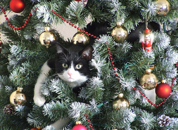 cat love , lol!