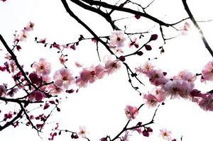 Salon du livre 2012 de Paris : Le Japon à l'honneur
