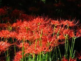 images : ma fleur préfère