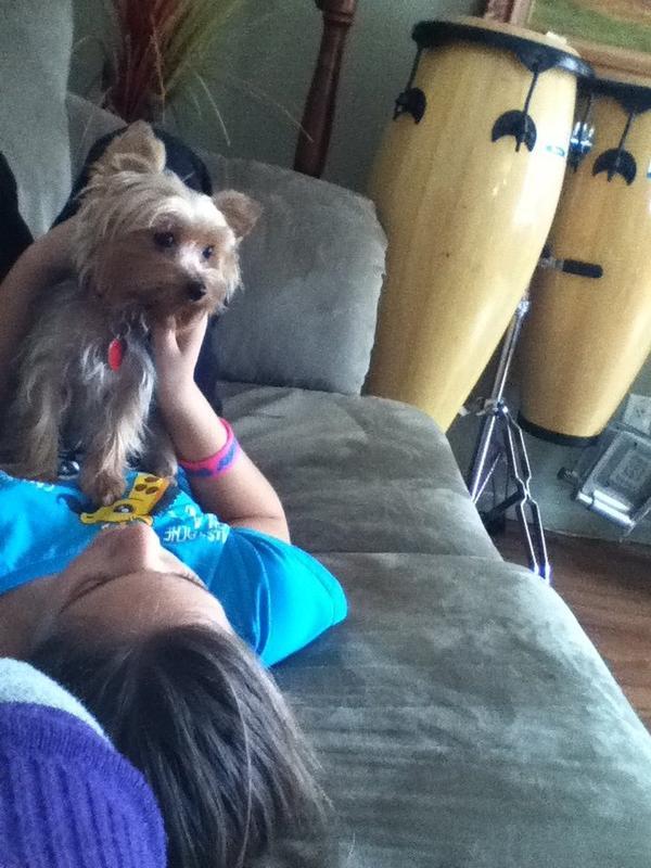 mon peti chien