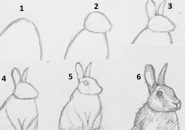 Drawing animals how to draw a rabbit