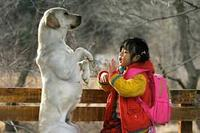 Film : Coréen Hearty Paws  97 minutes