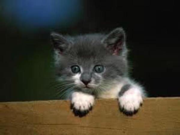 La vie d'un Chat