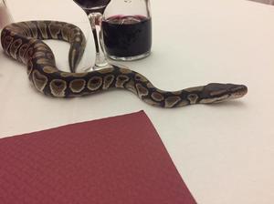 Je vous présentes Satan ( Python Royal )