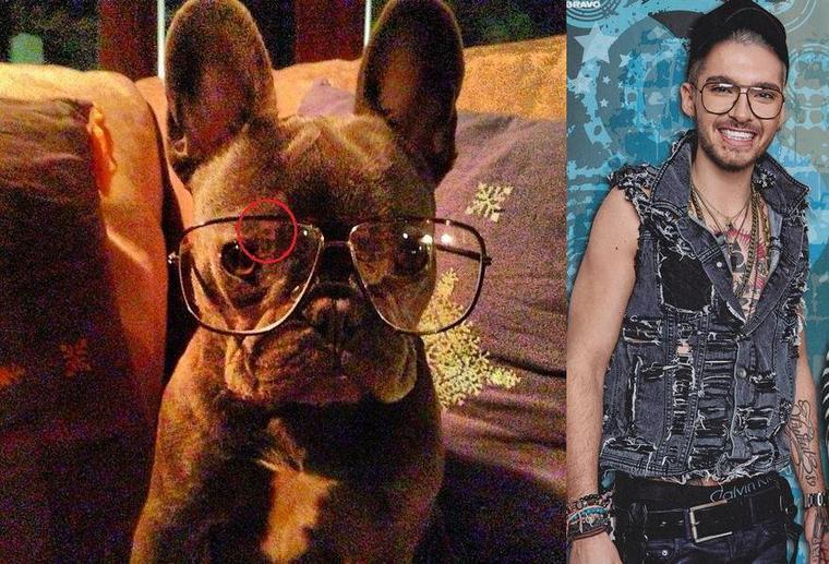 Nowhere: Les Twins gardent le chien d'Alex et Kate de Tsquad haha :)