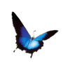 ♥ Butterfly - By Lapiin Blanc ♥