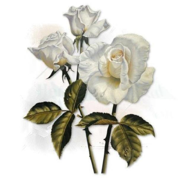 >>  Merci A Vous Mes Ami(e)s