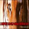 Si tu soutiens la cause des animaux, met cette image sur ton blog !    SOS-HELP-ANIMALS.skyrock.com