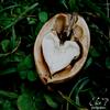 Thème 03 : Les Fruits Photo n°09 Coeur de noix