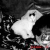mauvaise nouvelle ajd ...  17 mais 2009 en mémoire a toi petit chat ='(