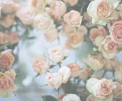 """♥ """"Le malheur n'existe pas. C'est l'absence d'amour."""" -William Shakespeare."""