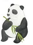 Un noel responsable : Idée cadéaux Bracelet fauna (aide des associations d'Animaux)
