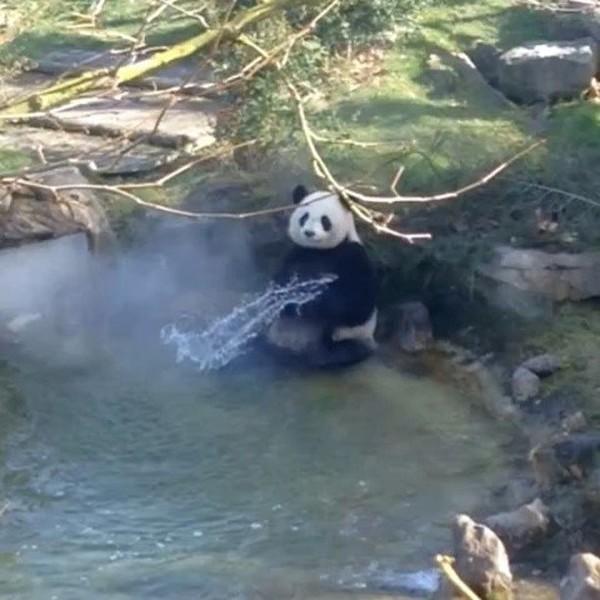 Instagram post by ZooParc de Beauval - Officiel • Mar 15, 2017 at 2:06pm UTC