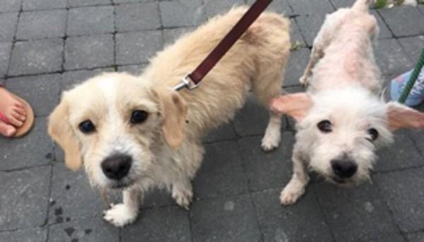 Il ne donnait pas à boire à ses chiens… pour ne pas qu'ils urinent ! - Fondation 30 Millions d'Amis