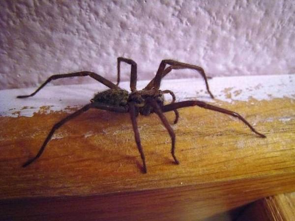 Pourquoi il faut laisser la vie sauve aux araignées de votre maison - Edition du soir Ouest-France - 17/09/2021