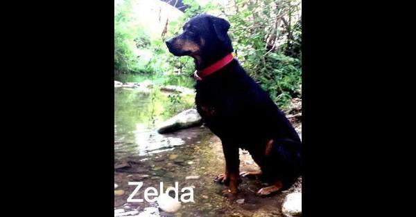 À cause de son âge, personne ne voudra adopter Zelda !