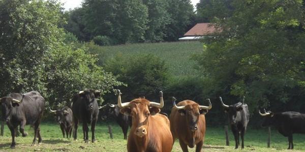 Des atouts... vaches ! - SudOuest.fr
