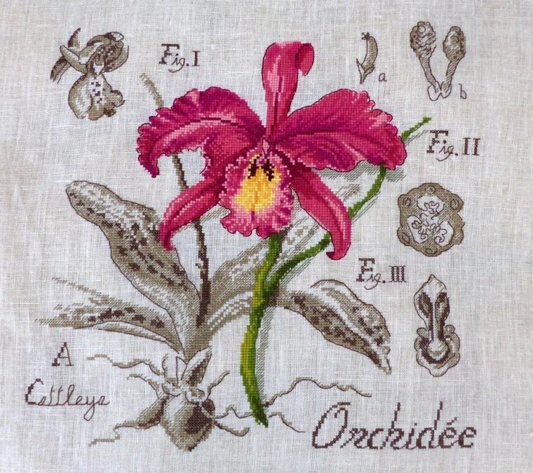 Mon univers Orchidées