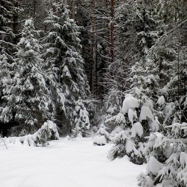"""Александр Гермаков on Instagram: """"Где то идут дожди, а у нас отличная погода. Такой заснеженный лес у нас в Воткин�..."""