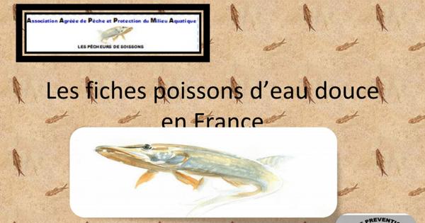 Les fiches poissons d'eau douce.pptx