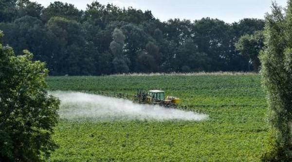 Les SDHI, des pesticides potentiellement plus dangereux que le glyphosate?