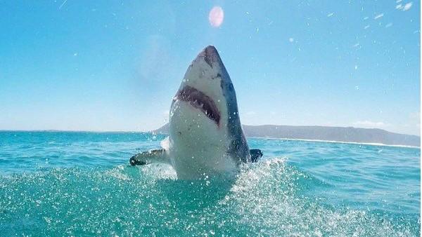 Une vidéo surprenante d'un courageux chien s'attaquant à un requin - LINFO.re - Magazine, Insolite