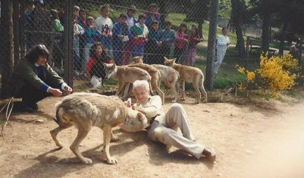 Ils ont vu le loup !
