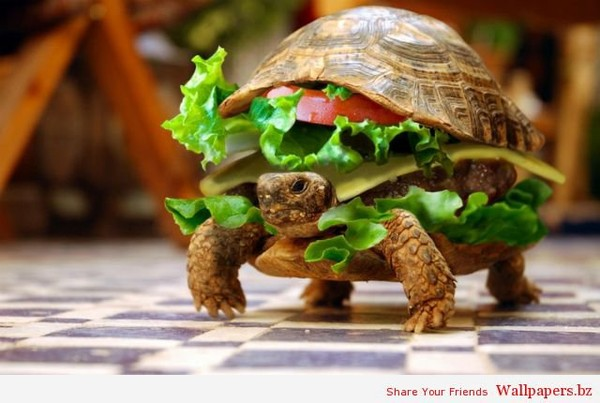 Chinese Man Tries To Smuggle His Pet Turtle On a Plane Disguised as a Hamburger | Funny Wallpapers