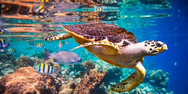 Communiqué de presse: Le dangereux déclin de la nature: Un taux d'extinction des espèces «sans précédent» et qui s'accélère