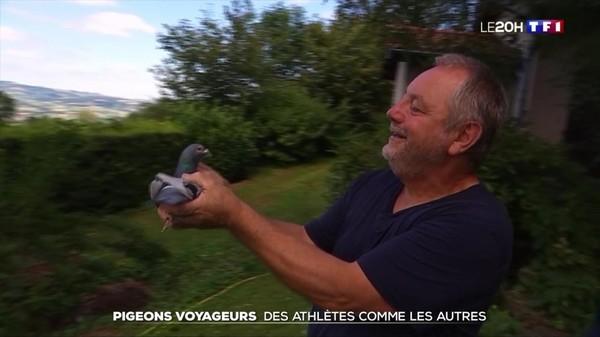 Pigeons voyageurs : des athlètes comme les autres