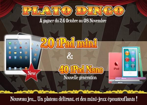 Plato Dingo