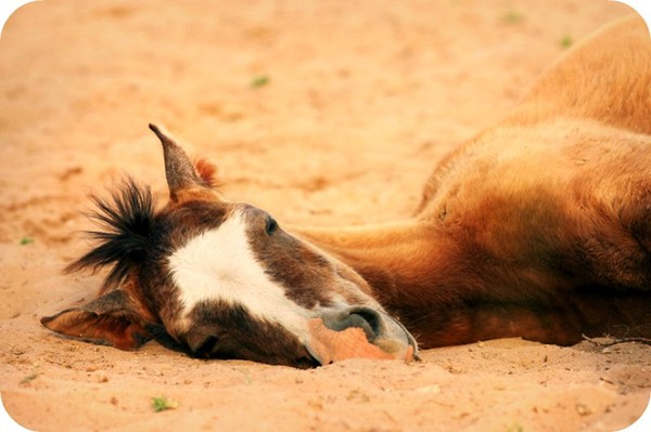 Do Not Place Your Bet on a Dead Horse. - Daily Poetry and Stories Portal | Easy Branches