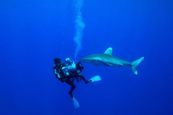 """""""Les Requins de la colère"""" : l'industrie du thon harponnée"""