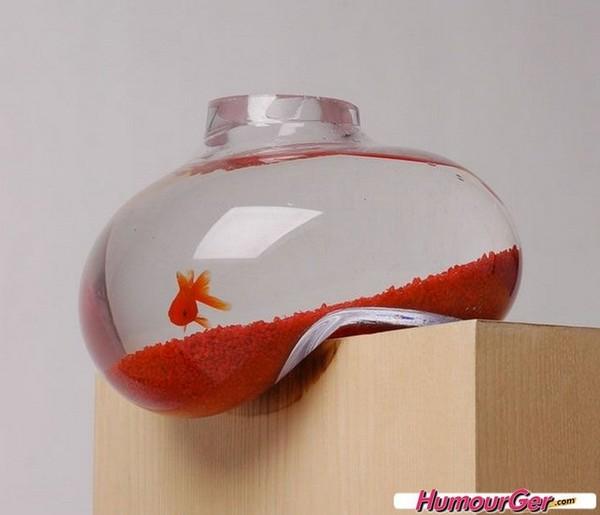 Photo originale d 39 un bocal pour poisson rouge la forme for Bocal poisson rouge
