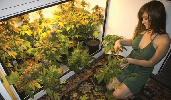 Coltivare Cannabis