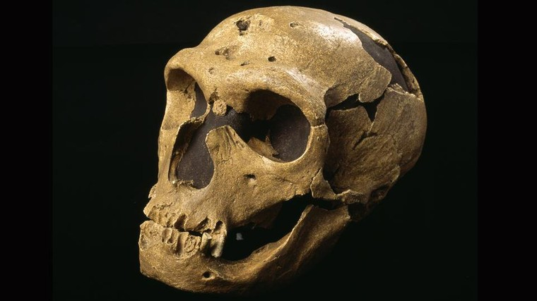 The mystery of Neanderthals' massive eyes