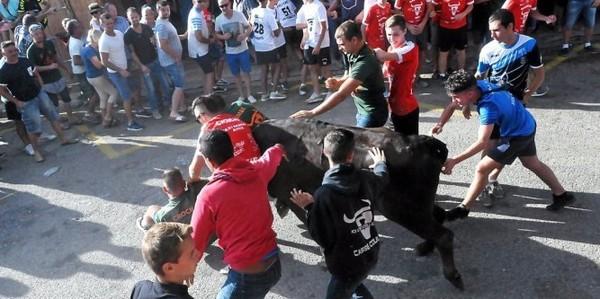 Espagne : ils mettent le feu à ses cornes, le taureau se tue sous leurs yeux