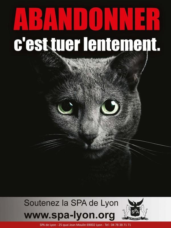 Communiqués et campagnes « SPA de Lyon et du Sud-Est – site officiel -